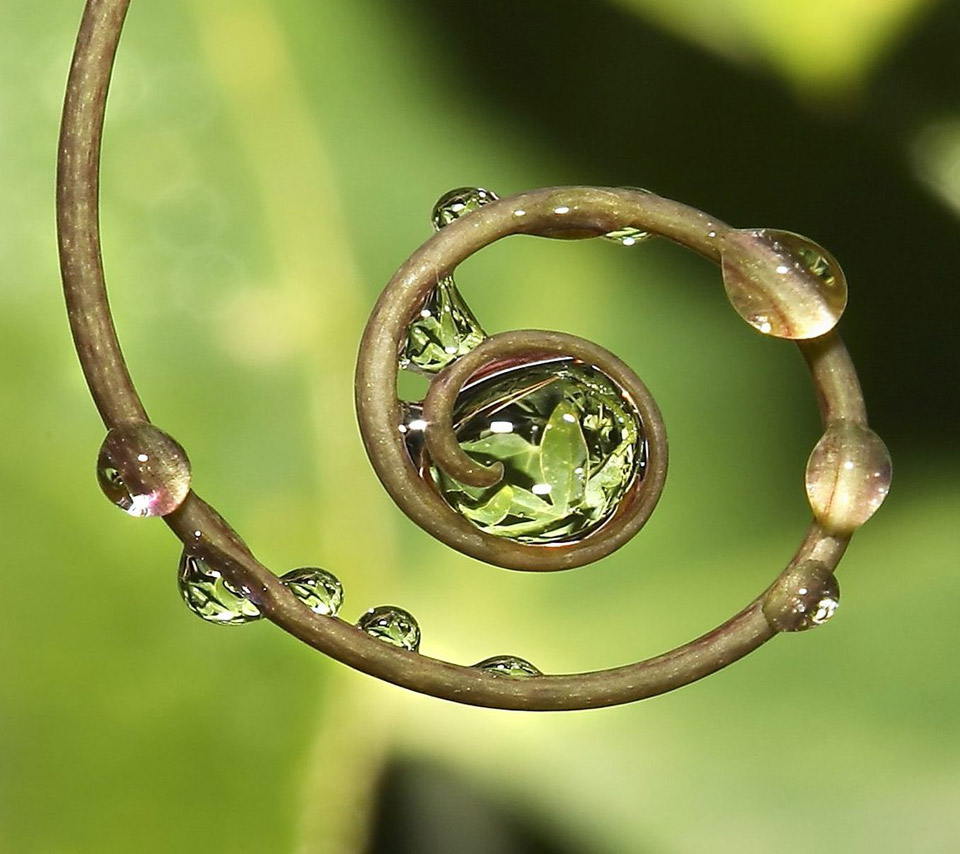 fern with dew
